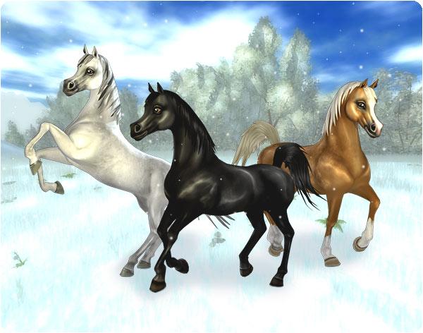 Underbara Arabhästar!