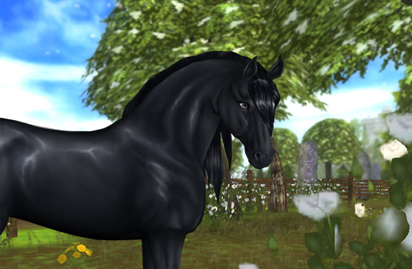 Check out this adorable Friesian!