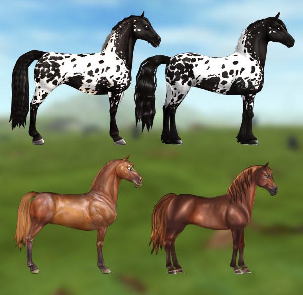 Starsze konie ze swoimi nowymi kuzynami!