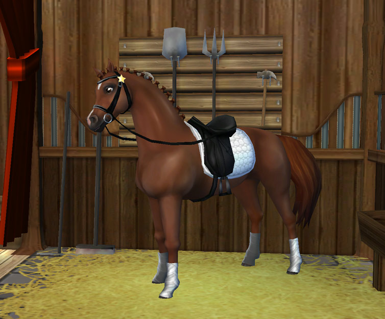 Nowe wyposażenie do dresażu dla Twojego konia!