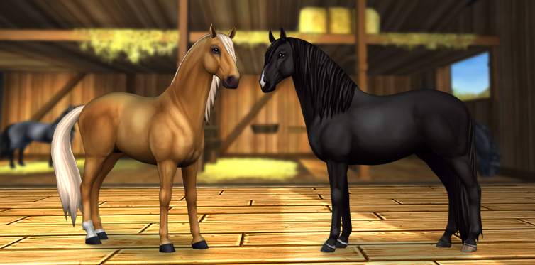 Will one of these #LovelyLusitanos join you in your stable?